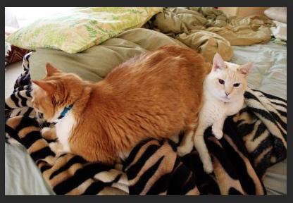 Two_Cats.png.38fd6e629d25e3c76a74a812268e9e8e.png