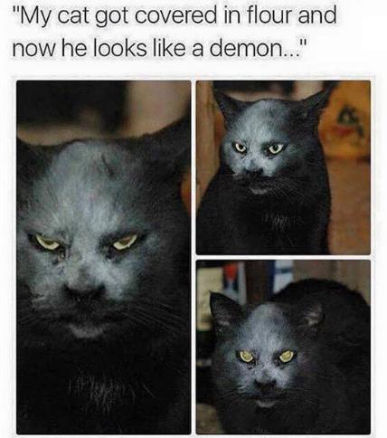 Demon Cat.png
