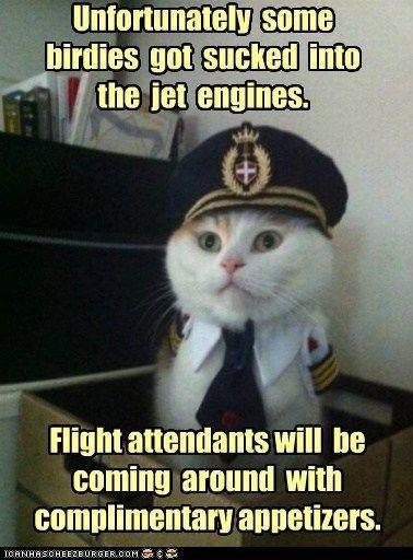 cat pilot.jpg