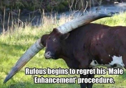 bull horns.jpg