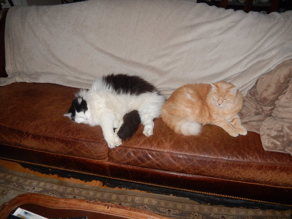 march2020 Ziggy and Francie on the Sofa.JPG