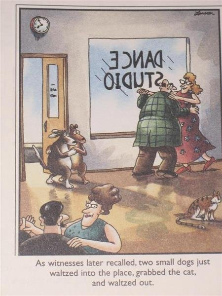 dog dance.jpg