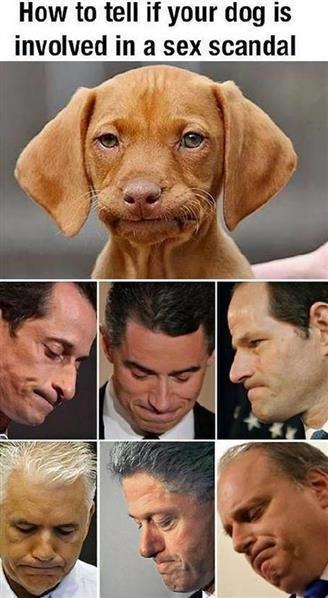 wiener dog.jpg