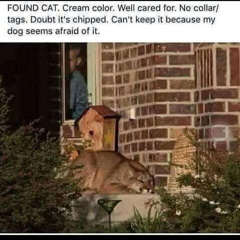 Found - cougar.jpg