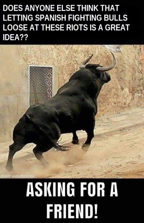 loosebulls2.jpg
