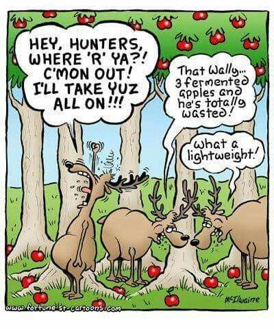 Hunting Fermented Apples.jpg