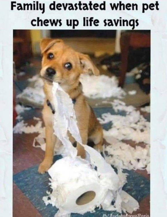 Corona dog with toilet paper.jpg