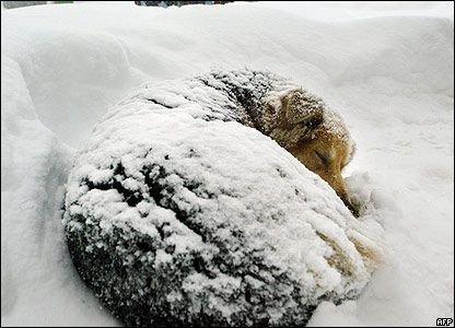 Cold dog.jpg
