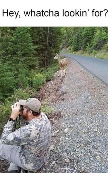 deer looking.jpg