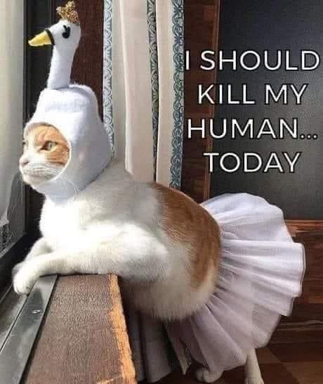 cat turkey.jpg