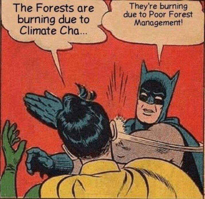 batmanpoorforestmanagement.jpeg