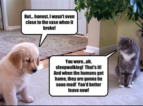cattreachery.jpg