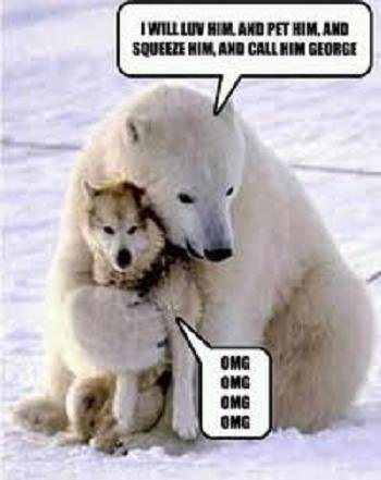 dog-humor-husky-hugged-by-polar-bear.jpg
