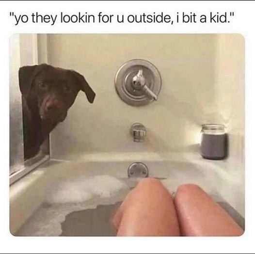 dogbathtublookingforyou.jpg