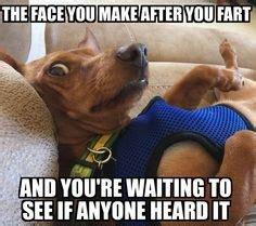 dogfartface.jpg