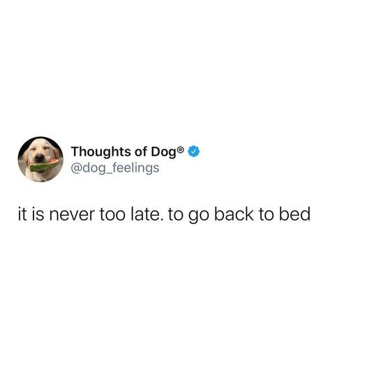 dogthoughtsnevertolatetogobacktobed.jpg