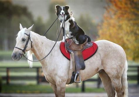 saddleupdog.jpg