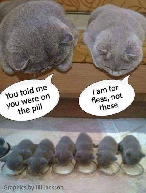 NoPill For Kittens 1-1.jpg