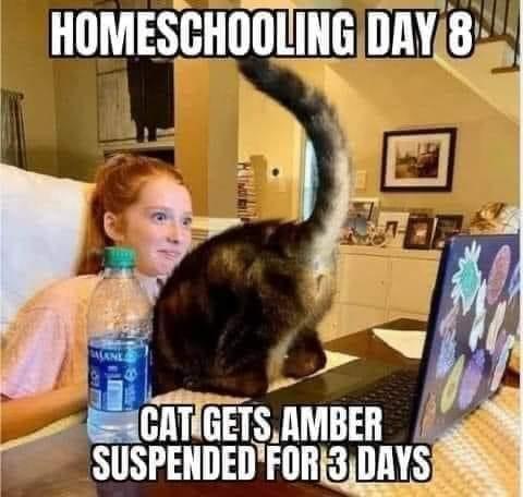 homew scholl cat.jpg