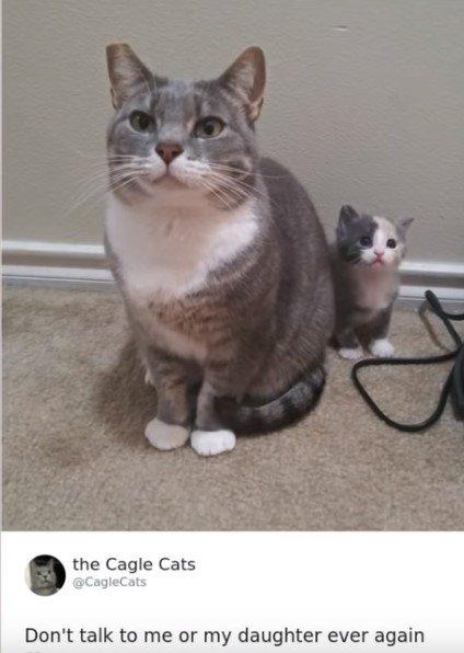 cats.jpg.f845c2240653447b2a6483a68e34486c.jpg