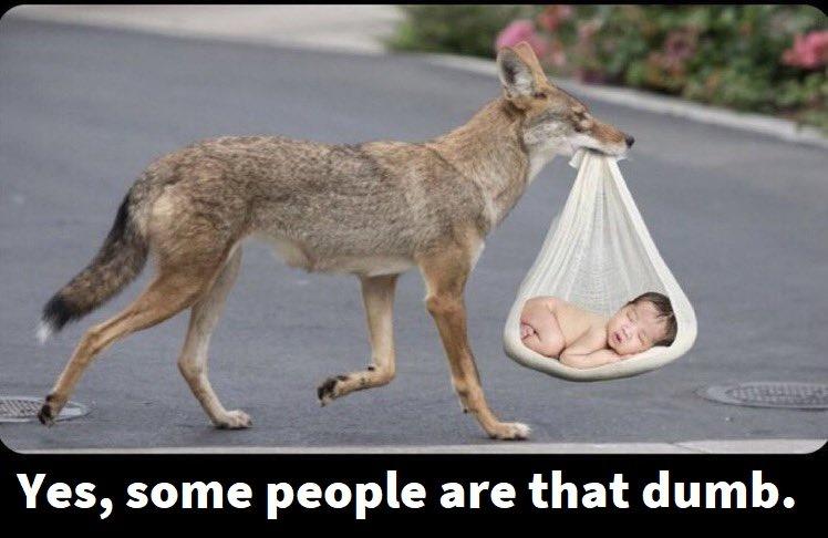 coyotethatdumb.jpg