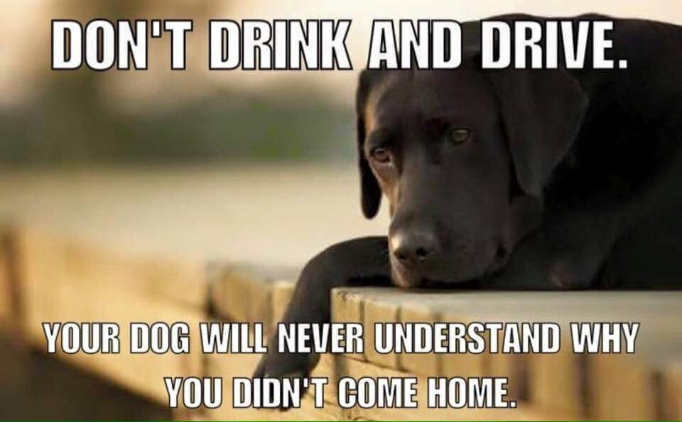 Dont Drink and Drive SAD DOG   1278921267298866039_n.jpg