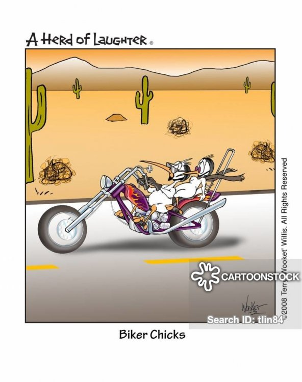 Biker Chicks.jpg