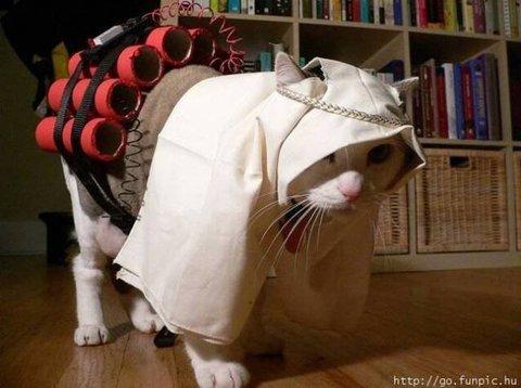 Persian cat.jpg