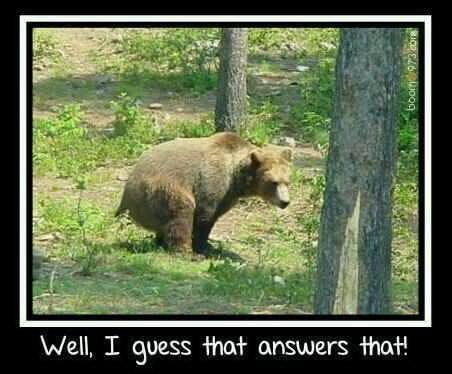 bear dump.jpg