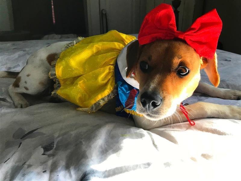 bow dog.jpg