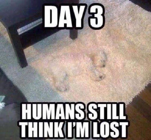AAA 1 Mugsy on a rug.jpg