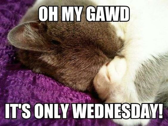 Its only Wednesdayb6.jpg
