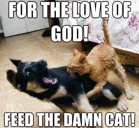 for-the-love-of-god-feed-the-damn-cat.jpg