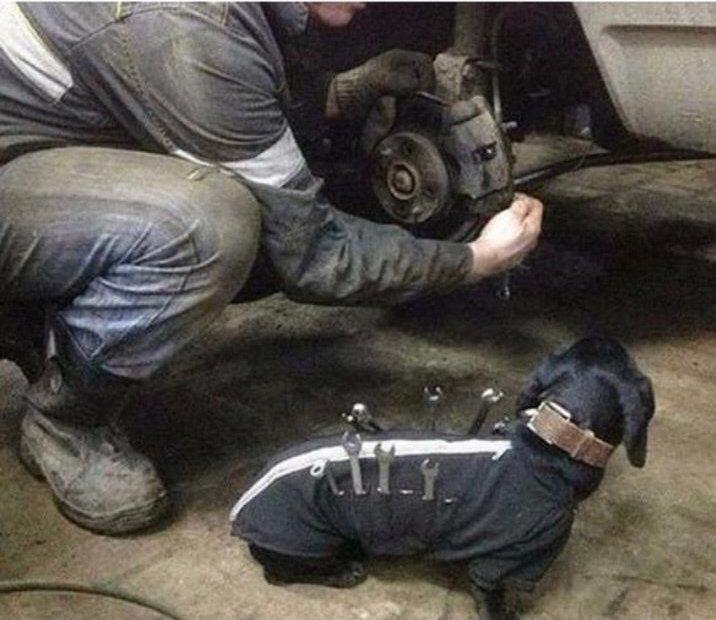 tooldog.jpg.9e0b3d3326a7e0928a077fb5d7b92db7.jpg