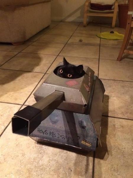 cat tank.jpg