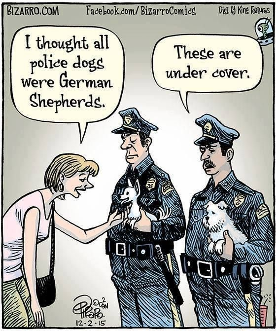under cover dogs.jpg