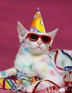 colored cat.jpg