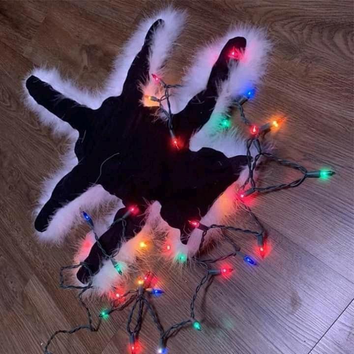 Flat Cat.jpg