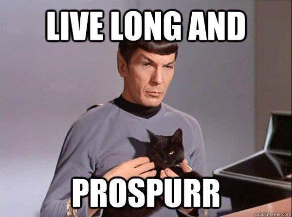 spock cat.jpg