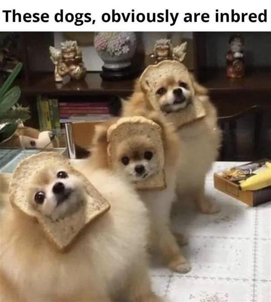 in bread.jpg