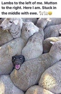 stuck in the middle with ewe.jpeg