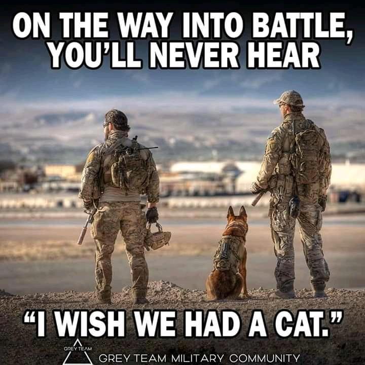 wish i had a cat.jpg