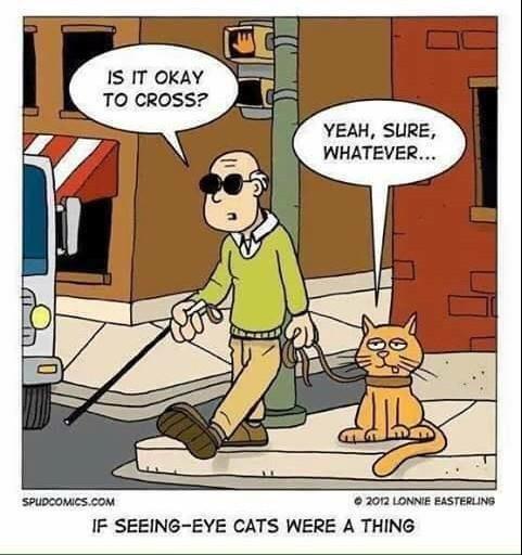 seeing eye cat.jpg