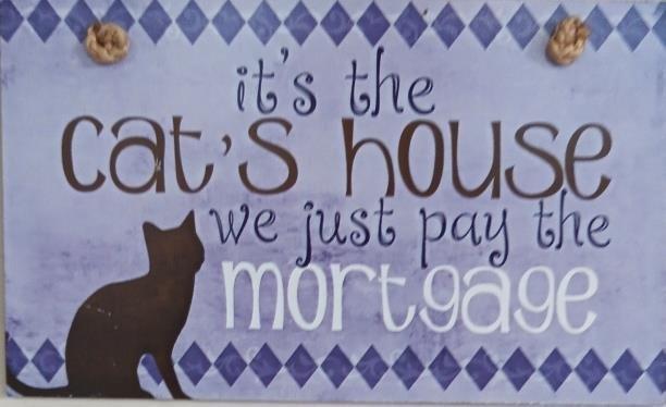 cat house.jpg