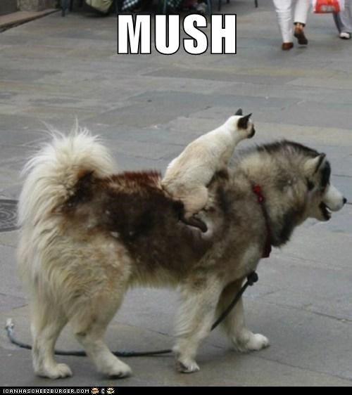 lolcats-mush.jpg