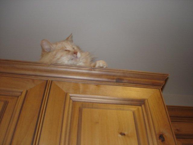 Obie on Cabinet003.JPG