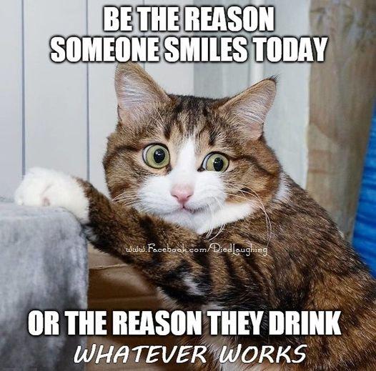 cats idea.jpg