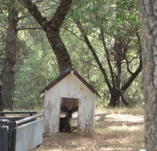 Deer in Dog House_Cropped.jpg