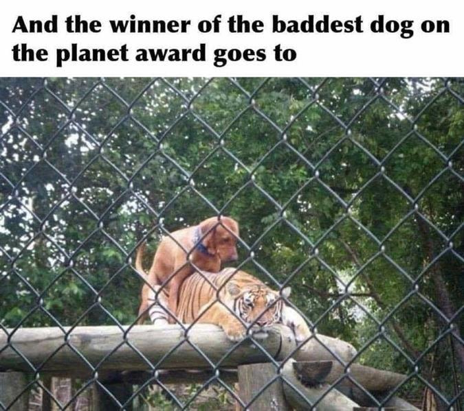 humping dog.jpg