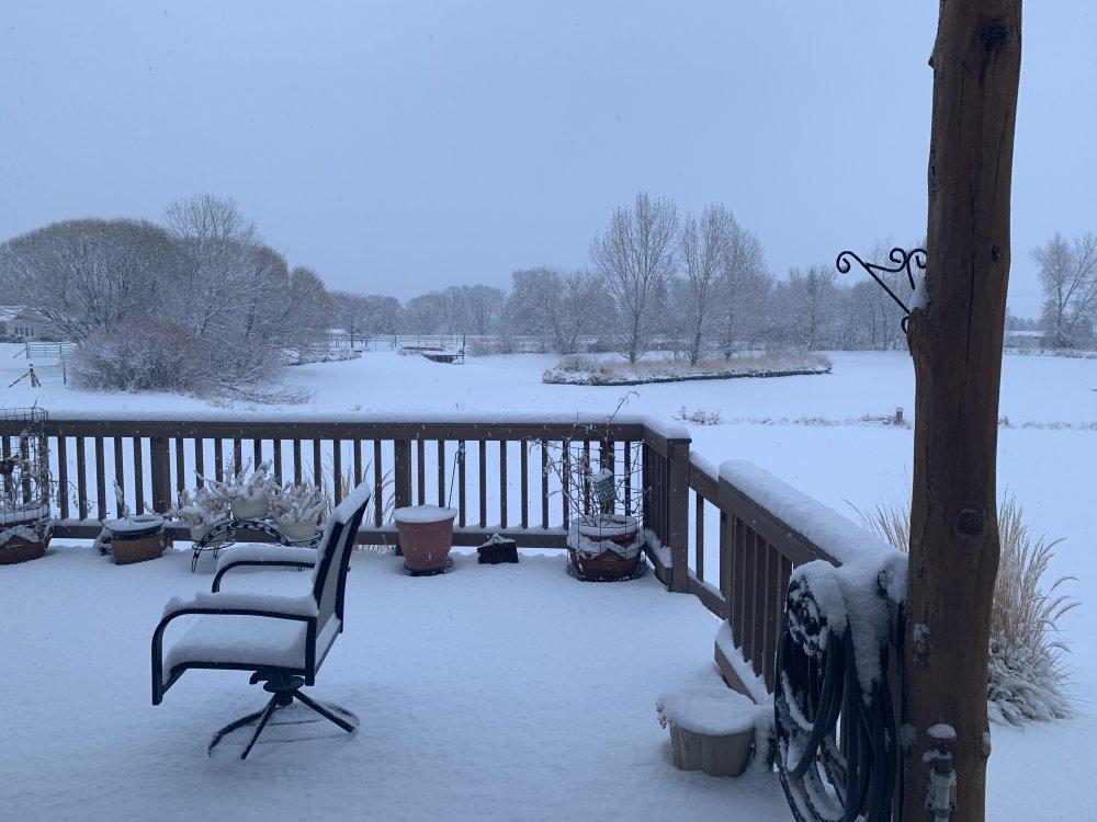 morning snow 003.JPG